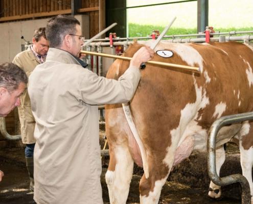 Bewerterschulung 2015 in der Steiermark: Bewertung am Tier